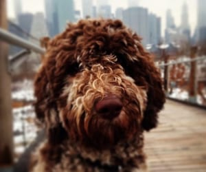 dog, happy, and animals image