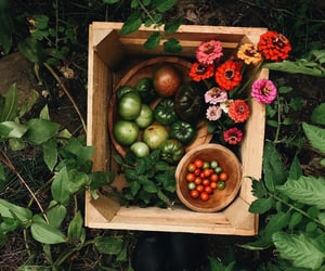 flowers, FRUiTS, and green image