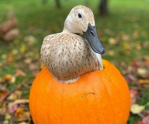 adorable, aww, and fall image