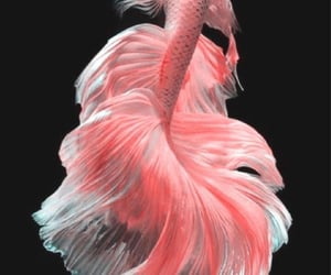 fish, wallpaper, and animal image