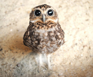 funny, owl, and sweet image