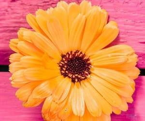 amarillo, gerbera, and flores image