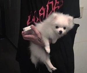 dog, grunge, and puppy image