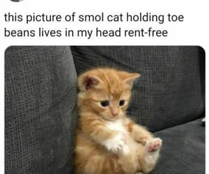 smol cat and holding his toe beans image