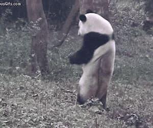 gif, dancing machine, and happy itchy panda image
