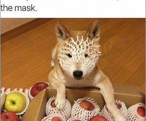 improvised dog mask image