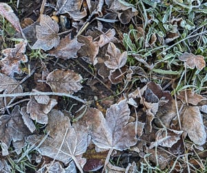 cold, early, and frost image