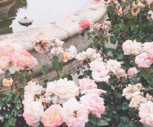 aesthetic, pink, and flower image