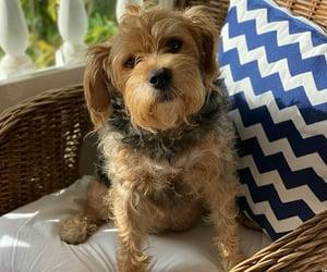 lindo, love, and perro image