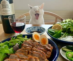 food, cat, and drink image