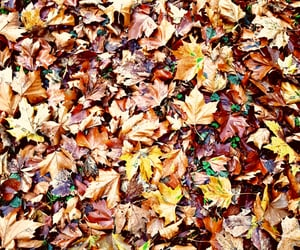 aesthetic, backround, and Herbst image