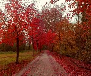 aesthetic, autumm, and fall image