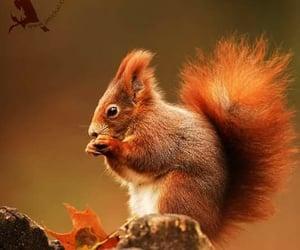 animal and autumn image