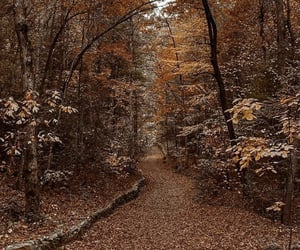 aesthetic, autum, and fall image