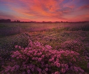 clouds, field, and flowers image