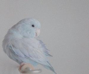bird, blue, and animals image