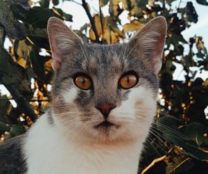 cat, pretty, and cat world image