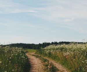 nature, flowers, and aesthetic image