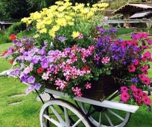 flowers, planter, and wheelbarrow image