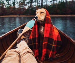 dog, cute, and boat image