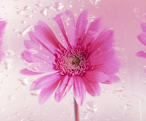 background, pink, and rainy image