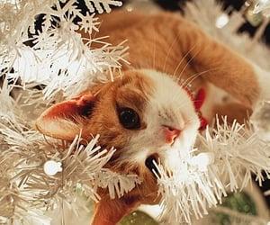 cat, christmas, and xmas image