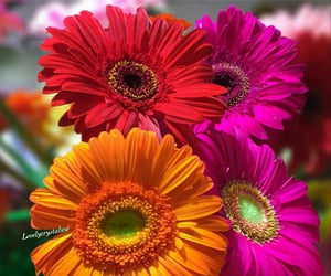 flores, flowers, and fleurs image