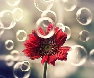 flowers, gerbera, and nature image