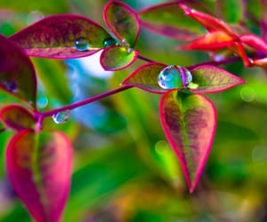 water drops and leave the time you want image