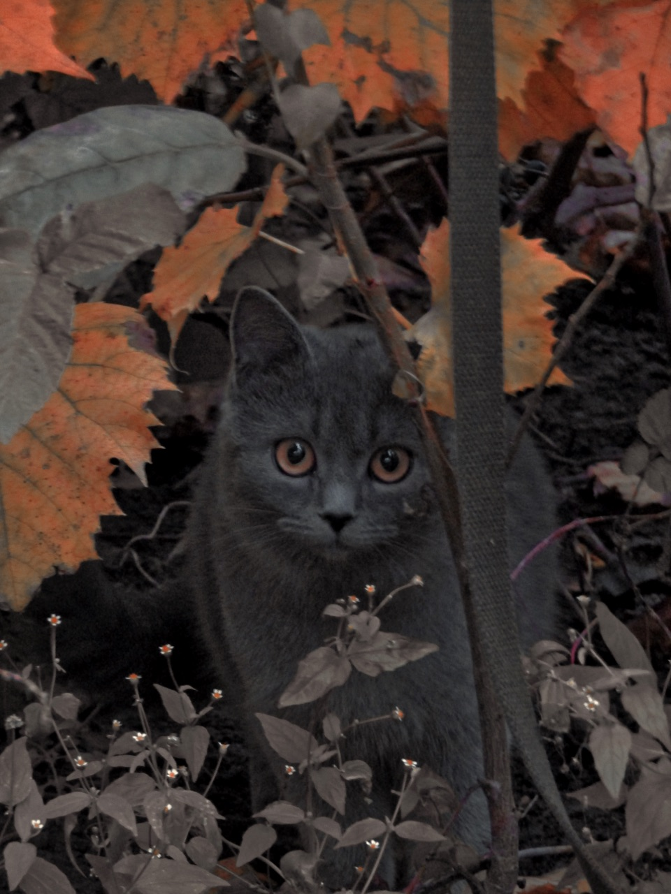 aesthetic, autumn, and cat image