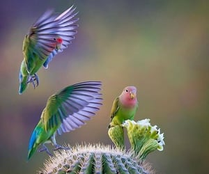 animals, feathers, and birds image