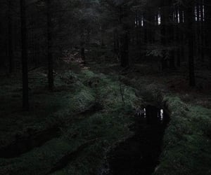 black, Darkness, and forest image