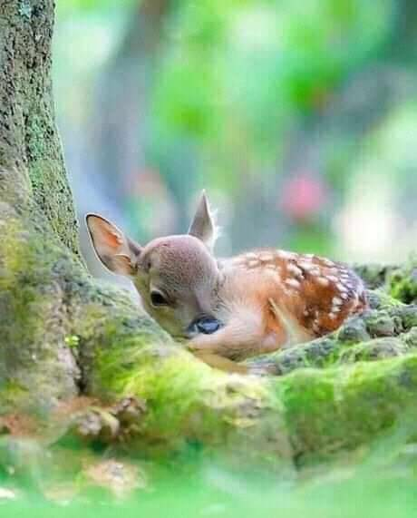 animal and nature image
