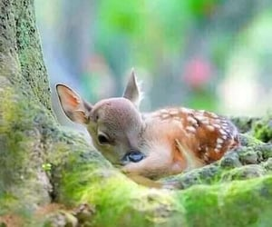 Animales, bambi, and cervatillo image