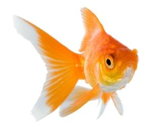fish, png, and animal image