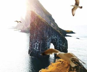 beautiful, travel, and birds image