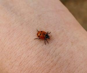 biology, joaninha, and ladybug image