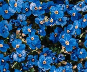 blue, flowers, and wonderful image