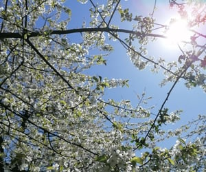 aesthetic, frühling, and cherryblossom image