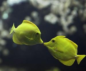 fish, kiss, and kissing image