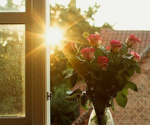 flowers, rose, and sun image