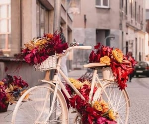 bicycle and flowers image