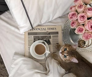 cat, flowers, and coffee image