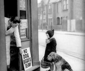 no dog biscuits toiday image