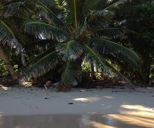 beach, palms, and travel image