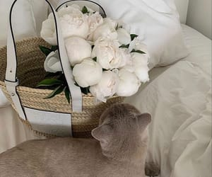 flowers, aesthetic, and cat image