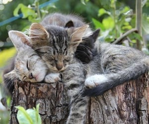 weekend, animal, and cat image