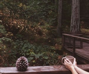 nature, forest, and coffee image