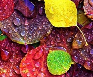 autumn, wallpaper, and colors image