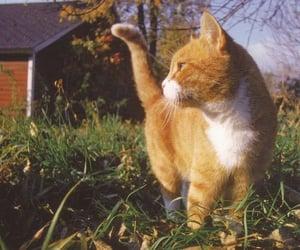 animal, cats, and orange image